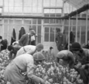 AOS P 1923 cecil robinsons nurseries, quadring 1934