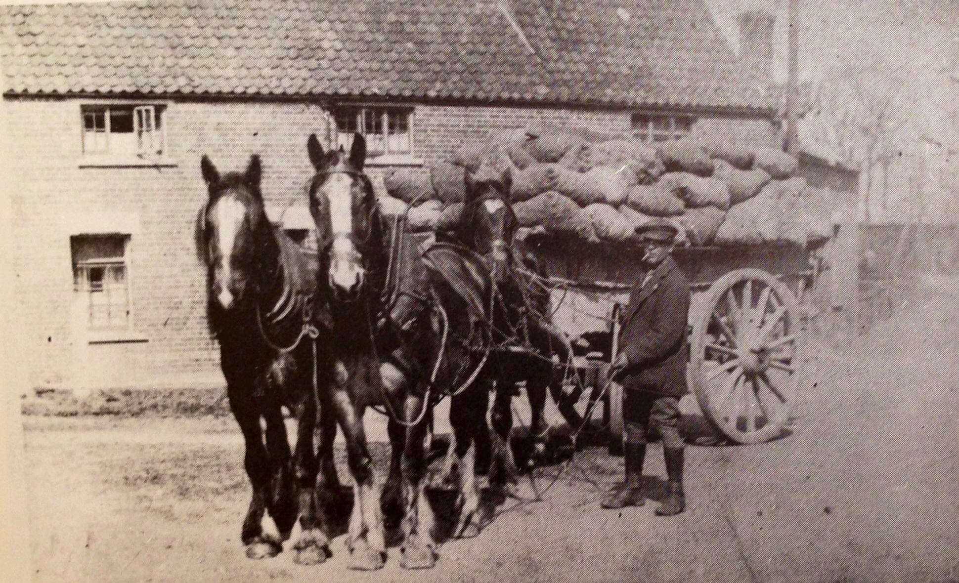 Delivering Potatoes in 1920's