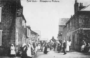 AOS P 2799  tydd gate strawberry pickers postcard. ladies in sunbonnets outisde white lion inn