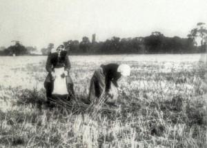 Farming ladies-p1_Fotor