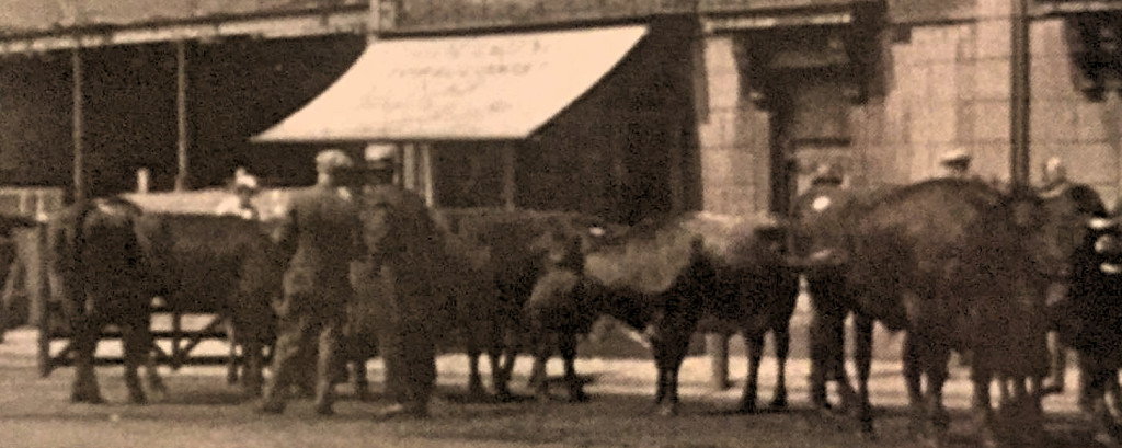 Cattle being sold on the streets in Spalding