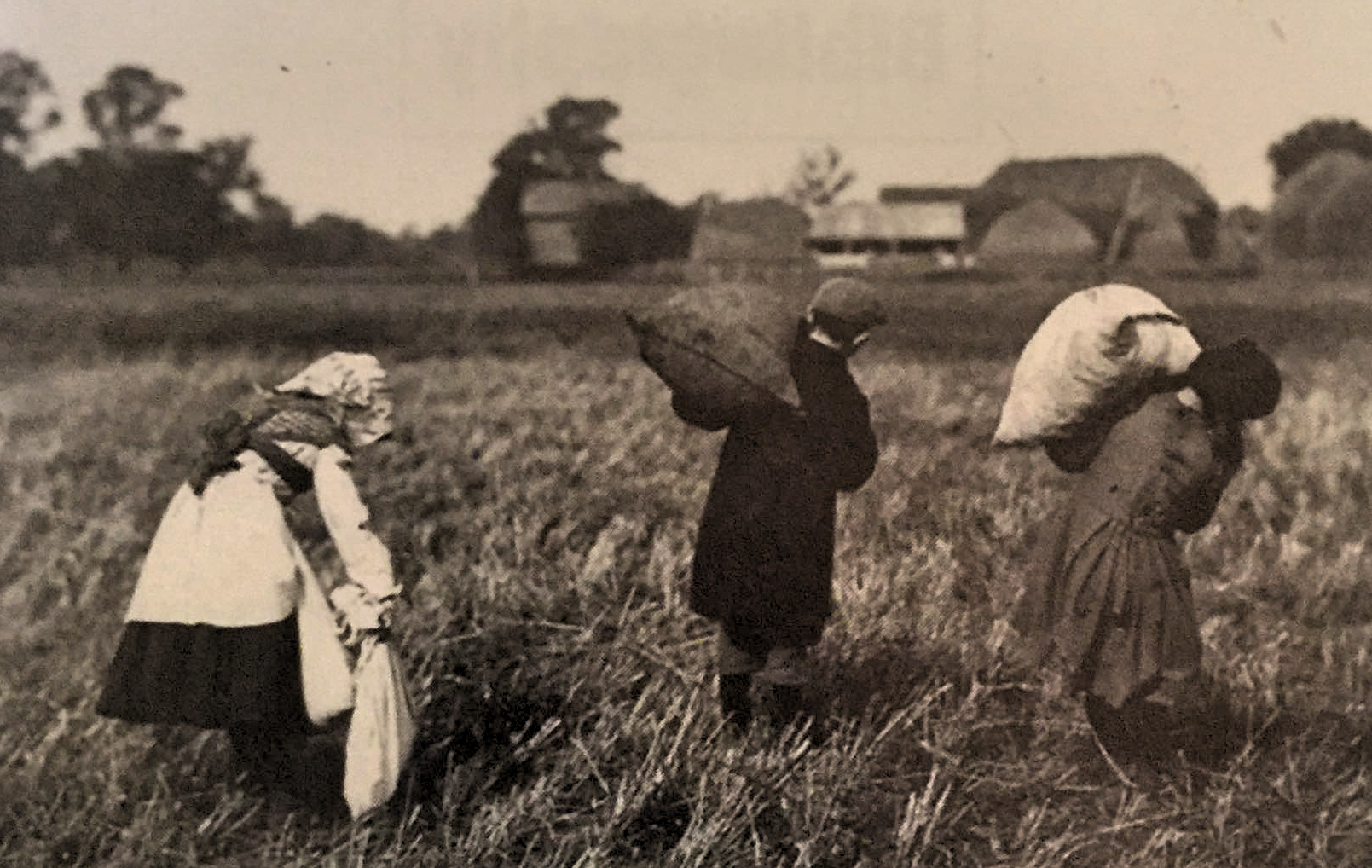 Gleaning in Pinchbeck