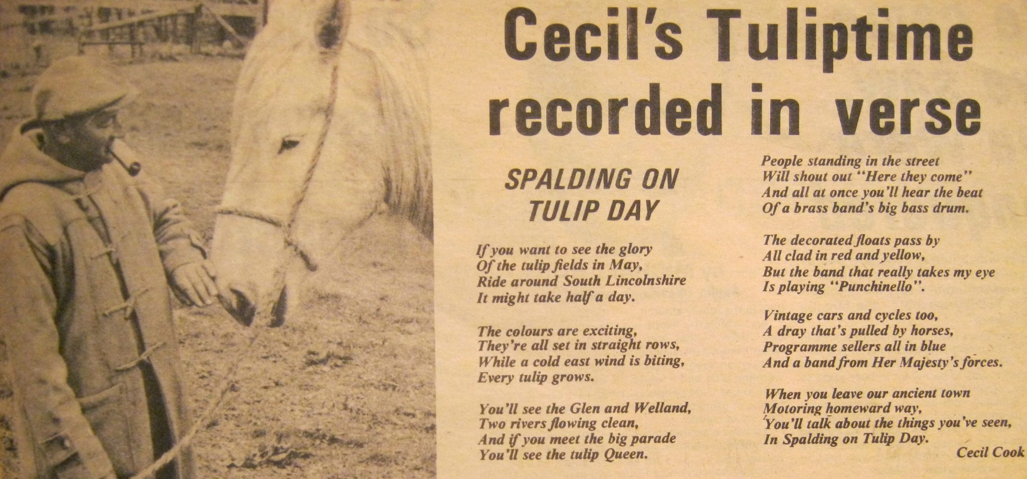 Tulip day poem by Cecil Cook