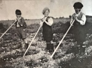 Family Farming in the 1950's