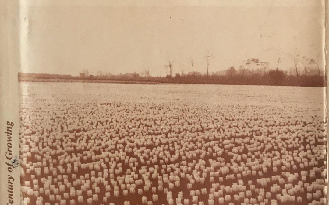 Bulbs in Britain
